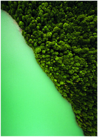 Green vegetation at river bank poster